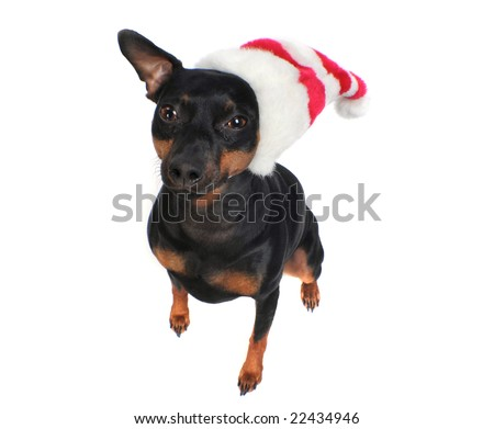 Dog in a hat - stock photo