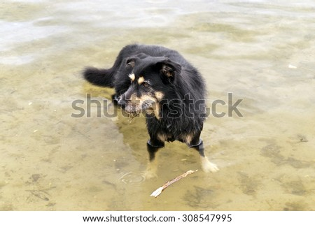Dog in a Lake - stock photo
