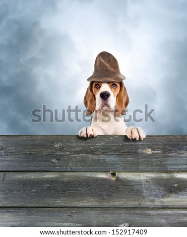 Dog in a magic hat against the storm sky - stock photo