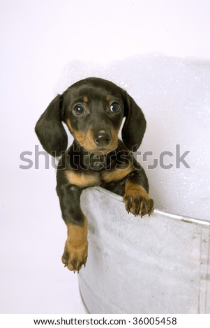 Dog in a metal tub with tons of bubbles. - stock photo