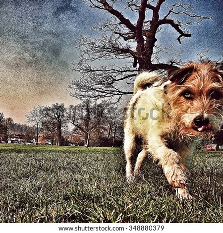 Dog in a park walking to camera
