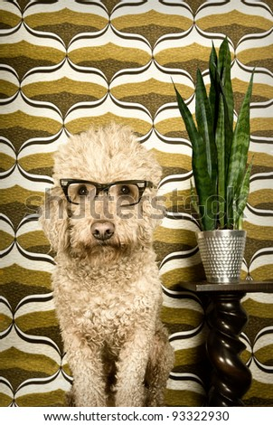 Dog in a retro setting - stock photo