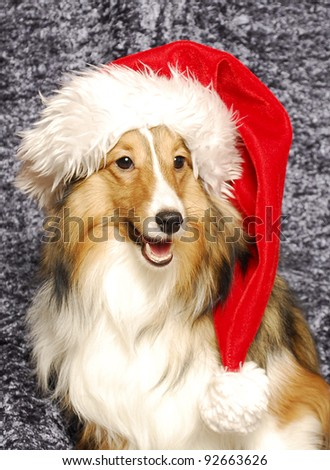 Dog in a Santa hat