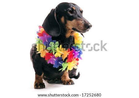 Dog in a wreath from flowers