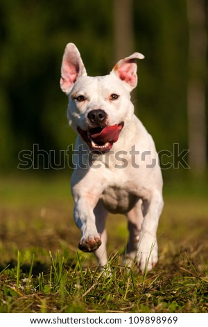 dog in action - stock photo
