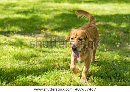 Dog in action,on the grass