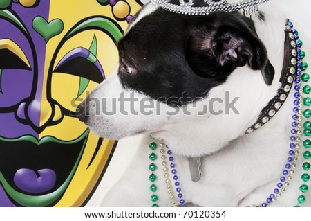 dog in beads ready for party - stock photo
