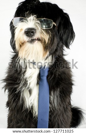 dog in business - stock photo