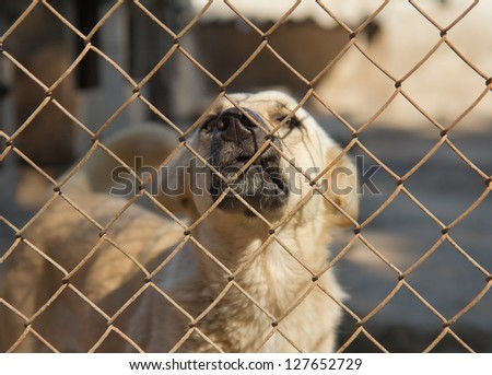 Dog in cage at the animal shelter