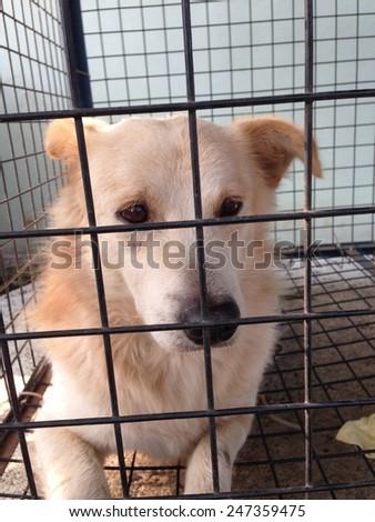 Dog in cage feeling sad - stock photo