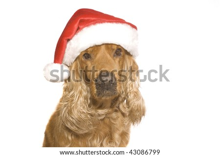 dog in cap, insulated on white background