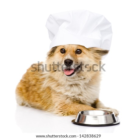 Dog in chef's hat begging for food. looking at camera. isolated on white background - stock photo