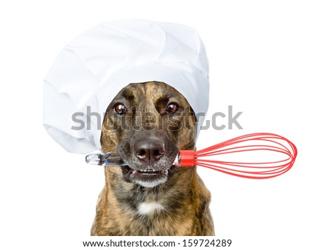 dog in chef's hat holding a wire whisk in mouth. isolated on white background - stock photo