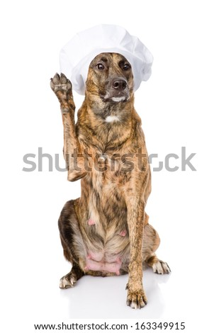 dog in chef's hat with a raised paw. isolated on white background - stock photo