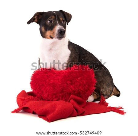 Dog in Christmas and New Year on a white background