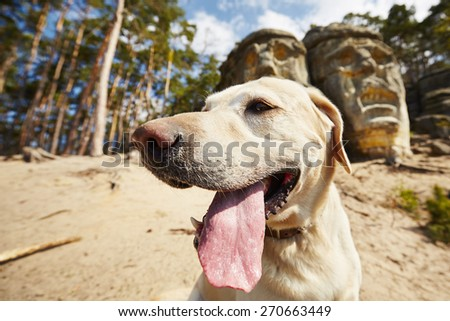 Dog in front of Devils heads carved into rock - stock photo