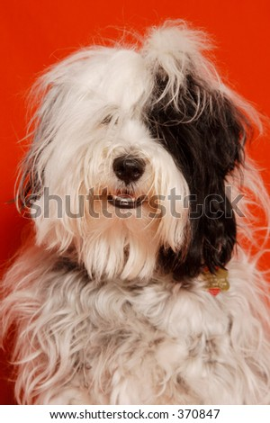 dog in front of red background