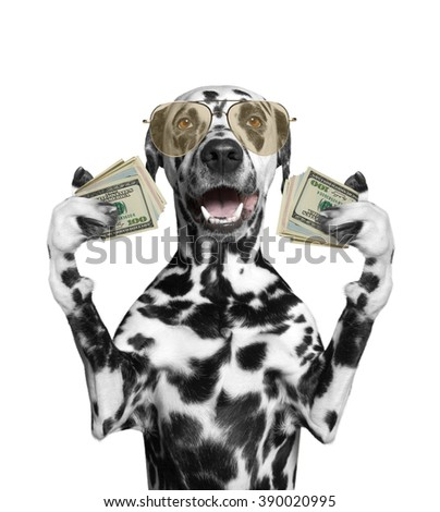 Dog in glasses holds in its paws a lot of money -- isolated on white background - stock photo