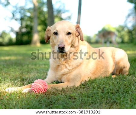 Dog in Grass with Ball