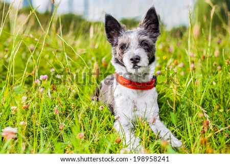 dog in green grass  thinking too much - stock photo