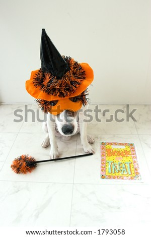 dog in halloween outfit - stock photo
