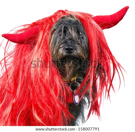 dog in halloween wig with devil horns - stock photo
