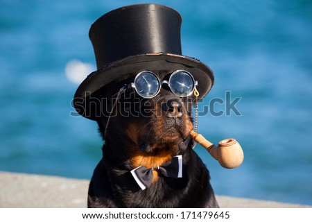 Dog in hat and spectacles