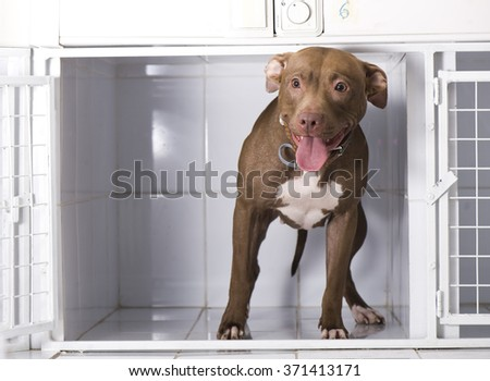 Dog in in an animal shelter, waiting for a home
