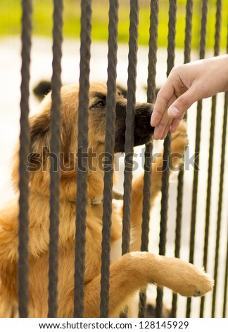 Dog In Jail Waiting For Adoption - stock photo