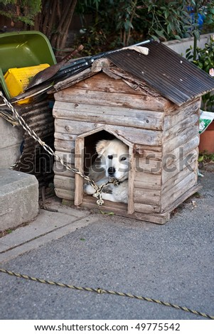 Dog in kennel - stock photo