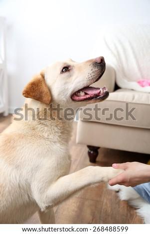 Dog in messy room - stock photo