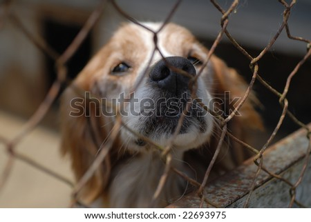 Dog in pound - stock photo