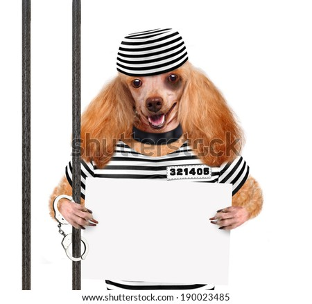 Dog in prison. - stock photo