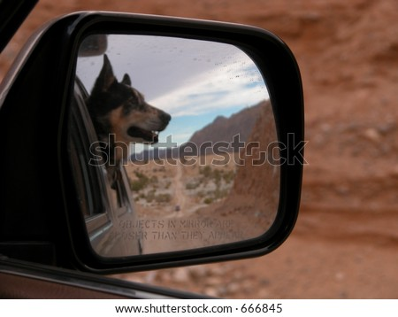 Dog in Rear-view Mirror