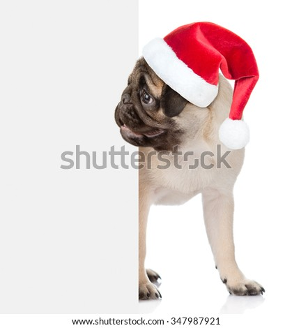 Dog in red christmas hat peeks out from behind a white banner. Space for text. Isolated on white background - stock photo