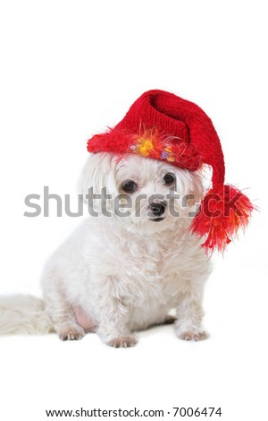 Dog in red winter hat - stock photo