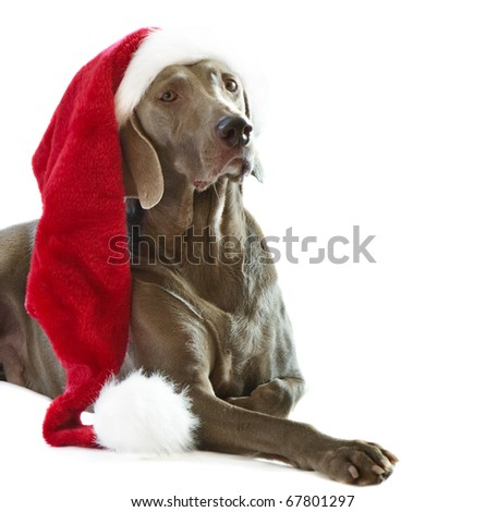 Dog in Santa hat - stock photo
