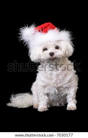 Dog in Santa Hat - stock photo