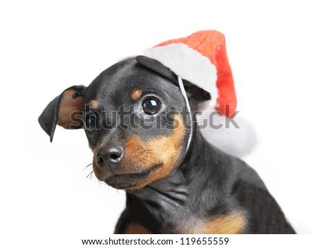 Dog in Santa hat isolated on white background - stock photo