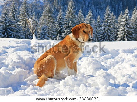 Dog in snow on the mountain - stock photo