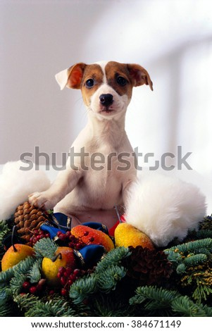 Dog in the new year - stock photo