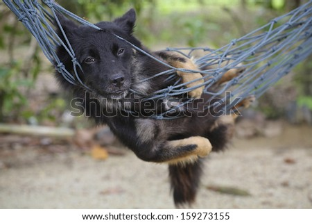Dog in the North cradle. - stock photo