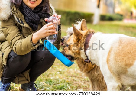 dog in the park drinking from the drinking bowl