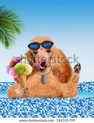 Dog in the pool