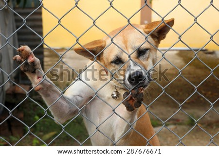 dog  in the pound - stock photo
