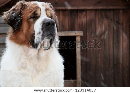 dog in the snow in winter
