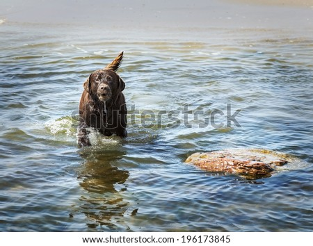 Dog in the water, Baltic Sea, Poland