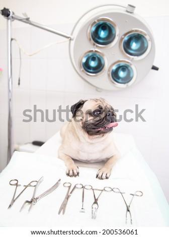 dog  in veterinary clinic near medical tool - stock photo