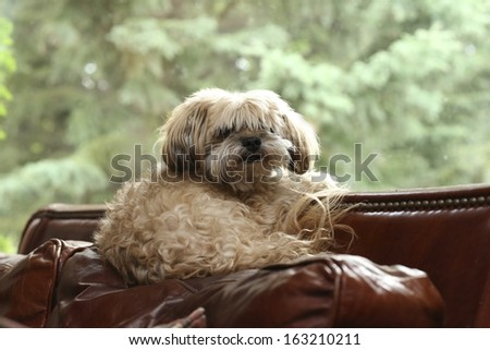 Dog in Window - stock photo