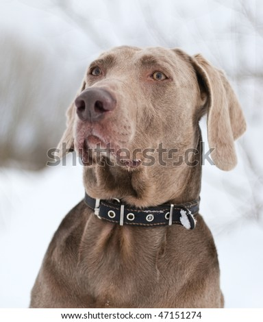 Dog in winter day - stock photo